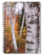 Birch Trees Fall Scenery Spiral Notebook