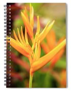 Bird Of Paradise Plant In The Garden. Spiral Notebook