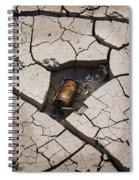 Blair Cracked Mud 1695 Spiral Notebook