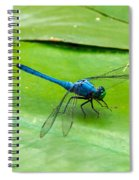 Blue Dragonfly On Lily Pad Spiral Notebook