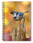 Blue Jay With Acorn Spiral Notebook