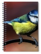 Blue Tit Spiral Notebook