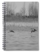Blue Wing Teal Pair Spiral Notebook
