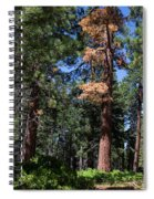 Bluff Lake Forest 6 Spiral Notebook