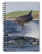 Bottlenose Dolphin - Scotland  #14 Spiral Notebook