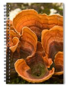 Bracket Fungi Spiral Notebook