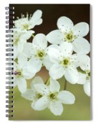 Bradford Pear Flower Spiral Notebook