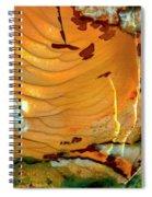 Brecciated Imperial Jasper Spiral Notebook