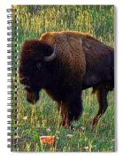 Buffalo Custer State Park Spiral Notebook