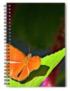 Butterfly 22 Spiral Notebook