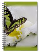 Butterfly On White Spiral Notebook