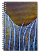 Butterfly Wing Scale Sem Spiral Notebook