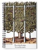 Cactus: Opuntia, 1613 Spiral Notebook