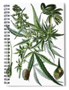 Cannabis Sativa Spiral Notebook