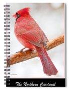 Cardinal Male In Winter Spiral Notebook