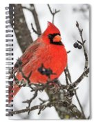 Cardinal Red Spiral Notebook