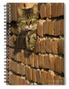 Cat On A Brick Wall Spiral Notebook