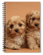 Cavapoo Pups Spiral Notebook
