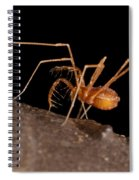 Cave Harvestman Spiral Notebook