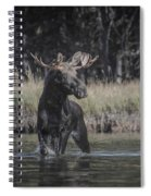 Chasing Tail Spiral Notebook