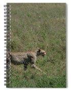 Cheetah On The Serengeti Spiral Notebook