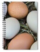 Chicken Eggs Spiral Notebook