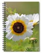 Chrysanthemum Named Polar Star Spiral Notebook