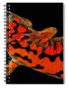 Chuxiong Fire Belly Newt Spiral Notebook