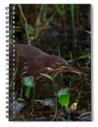 Cinnamon Bittern Spiral Notebook