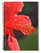 Close Up Of A Red Hibiscus Spiral Notebook