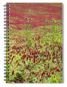 common sainfoin Onobrychis viciifolia Spiral Notebook
