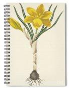 Common Yellow Crocus Spiral Notebook