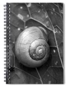 Conch Spiral Notebook