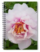 Cora Louise Spiral Notebook