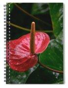 Corazon Chino Spiral Notebook
