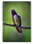 Costa's Hummingbird  Spiral Notebook