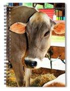 Cow 2 Spiral Notebook