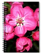 Crab Apple Blossoms Spiral Notebook