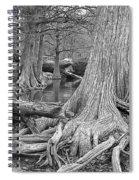 Cypress Trees I V Spiral Notebook