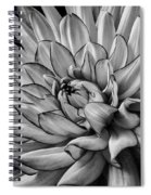 Dahlia In Black And White Close Up Spiral Notebook