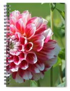 Dahlia Named Hawaii Spiral Notebook