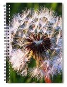 Dandelion In Nature Spiral Notebook