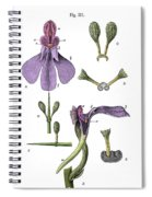 Darwins Orchis Pyramidalis, Illustration Spiral Notebook