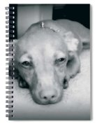 Day Dreaming Doxie Spiral Notebook
