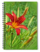 Daylily On Green Spiral Notebook