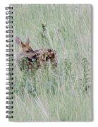 Denver Fawn Spiral Notebook
