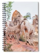 Desert Bighorn Family In Southern Utah Spiral Notebook