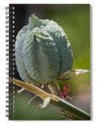 Desert Seed Pod 1 Spiral Notebook