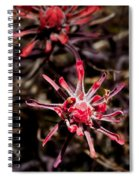 Desert Wildflower Spiral Notebook
