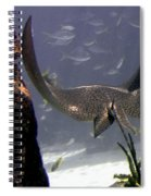 Devilray In Paradise Spiral Notebook